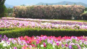 Daya Tarik Taman Bunga Puncak